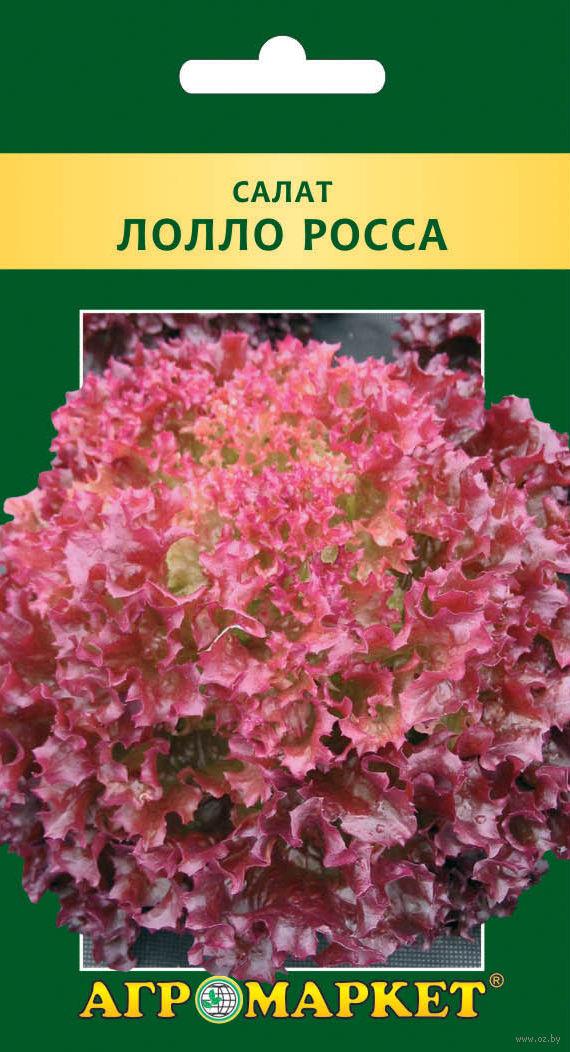 Салат лолло росса выращивание фотографии