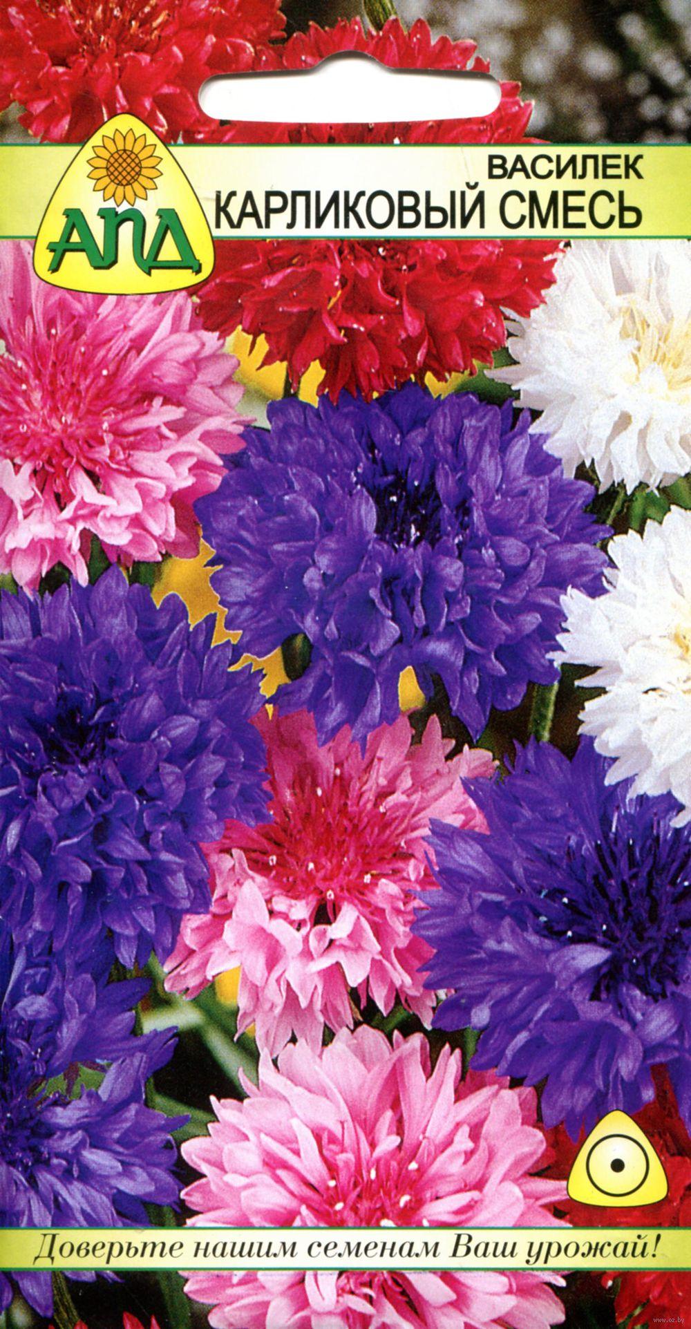 Купить в минске семена травы специй цветы весенние цветы купить по почте