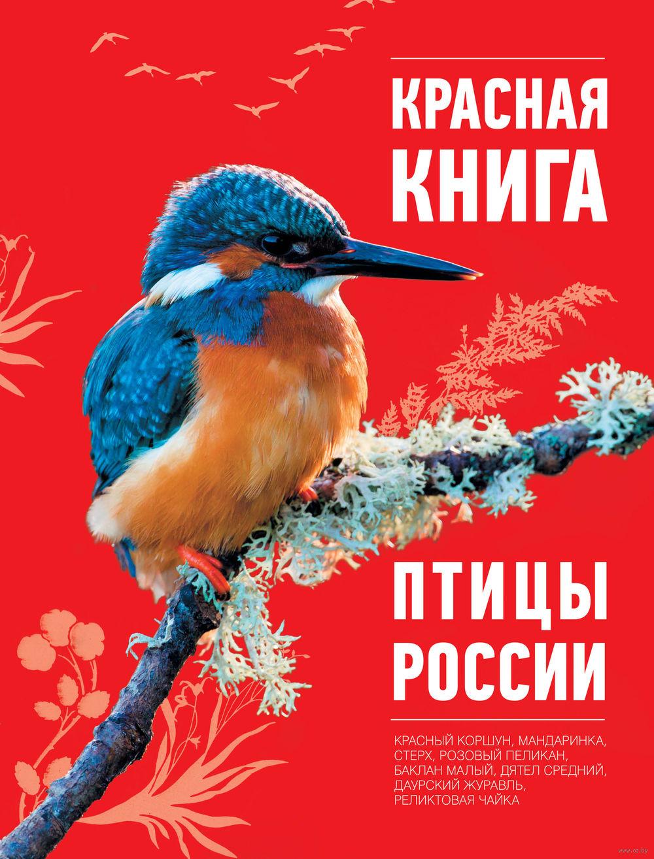 еще, птицы красной книги фото всему