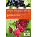 Полезные ягоды. Секреты сверхурожая — фото, картинка — 6