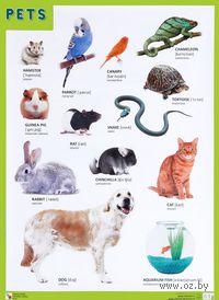 Pets. Плакат