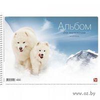 Альбом для рисования А4 (20 листов; обложка: ассорти)