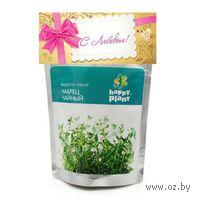 """Набор для выращивания растений """"Чабрец чайный"""" (тимьян)"""