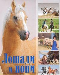 Лошади и пони. Владимир Жабцев