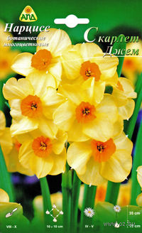 """Нарцисс ботанический многоцветковый """"Скарлет Джем"""""""