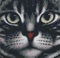 """Алмазная вышивка-мозаика """"Мордочка кота"""""""