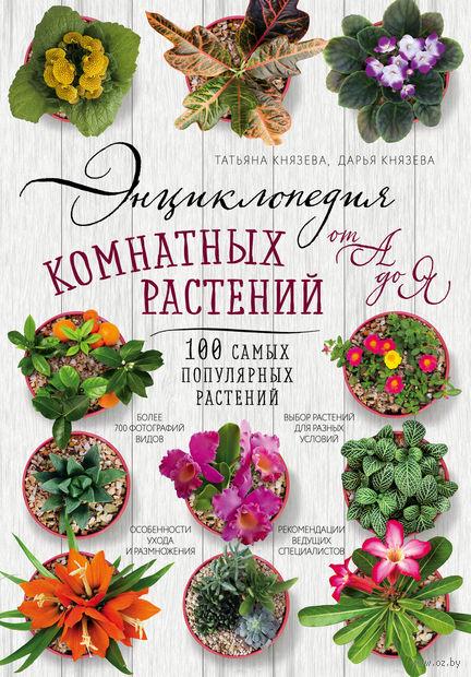 Энциклопедия комнатных растений от А до Я. 100 самых популярных растений — фото, картинка