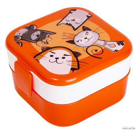 """Контейнер для еды """"Кошки"""" (0,4 л) — фото, картинка"""