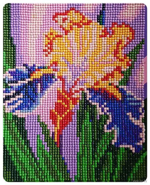 """Алмазная вышивка-мозаика """"Прекрасный ирис"""" (170х210 мм) — фото, картинка"""