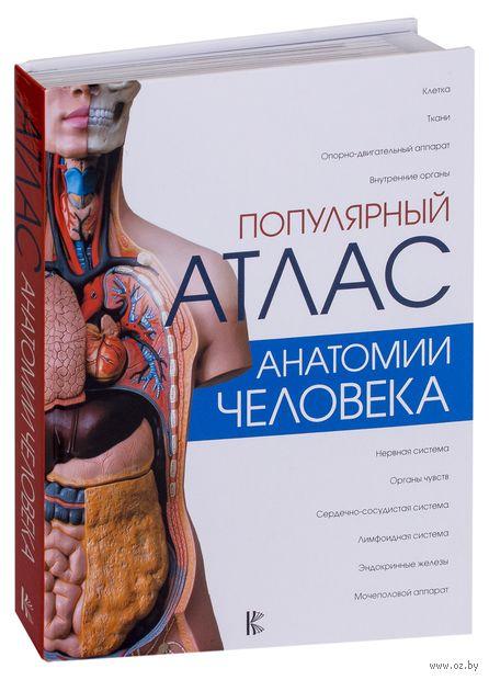 Популярный атлас анатомии человека — фото, картинка