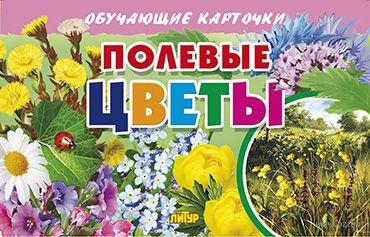 Полевые цветы — фото, картинка