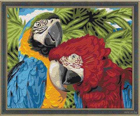 """Картина по номерам """"Пара попугаев"""" (400х500 мм) — фото, картинка"""