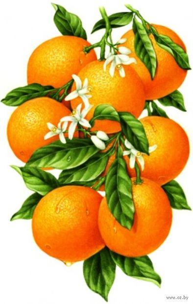 """Алмазная вышивка-мозаика """"Гроздь апельсинов"""" (310х480 мм) — фото, картинка"""