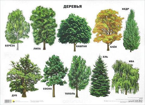 Деревья. Плакат — фото, картинка