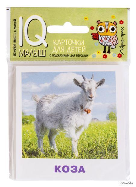 Домашние животные. Набор карточек — фото, картинка