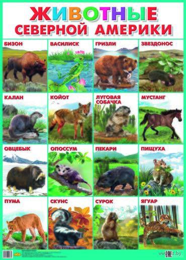 Плакат. Животные Северной Америки — фото, картинка