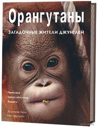 Орангутаны. Загадочные жители джунглей — фото, картинка