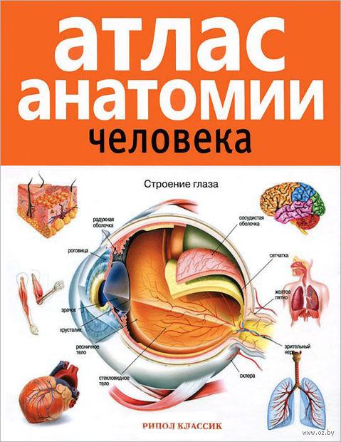 Атлас анатомии человека — фото, картинка