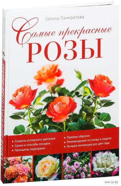 Самые прекрасные розы. Галина Панкратова