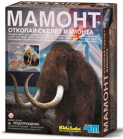 """Набор палеонтолога """"Скелет Мамонта"""" — фото, картинка"""