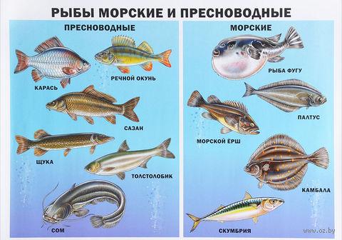 Рыбы морские и пресноводные. Плакат — фото, картинка