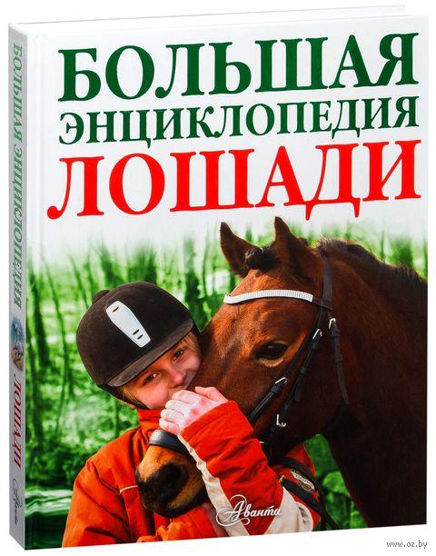 Лошади. Большая энциклопедия — фото, картинка