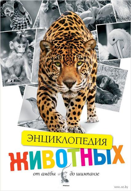 Энциклопедия животных. От амебы до шимпанзе — фото, картинка