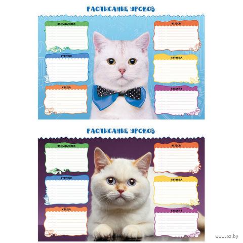 """Расписание уроков """"Коты"""" А3"""