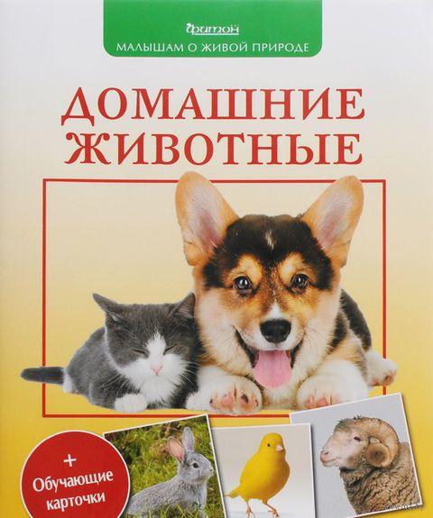 Домашние животные. Петр Волцит