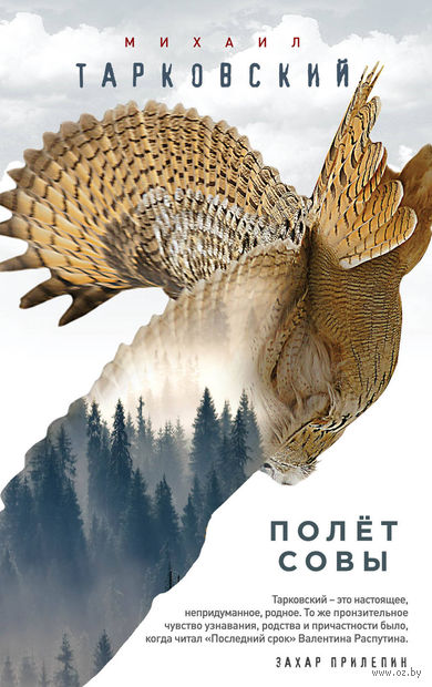Полет совы — фото, картинка