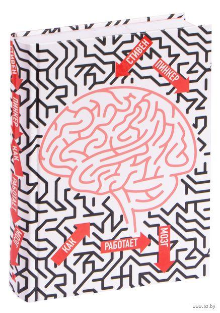 Как работает мозг — фото, картинка