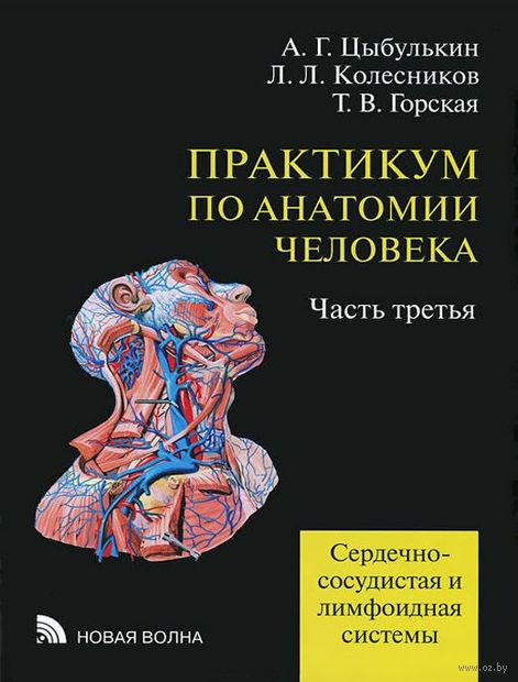 Практикум по анатомии человека. Часть 3. Сердечно-сосудистая и лимфоидная системы (в 4 частях)