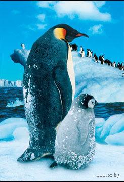 """Пазл """"В мире животных. Пингвин с малышом"""" (250 элементов) — фото, картинка"""