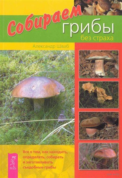 Собираем грибы без страха — фото, картинка