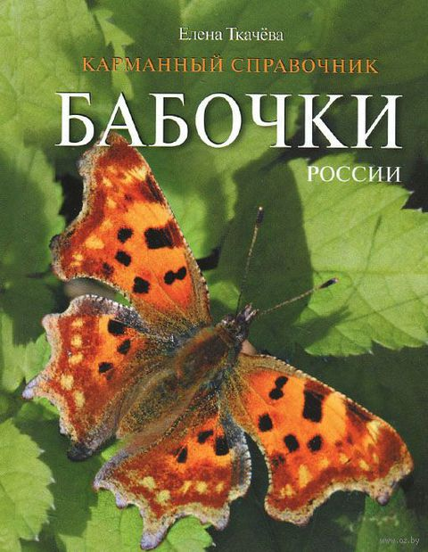 Бабочки России. Елена Ткачева
