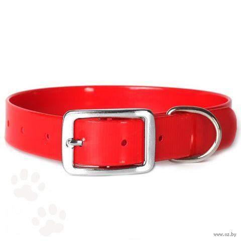 Ошейник (24-28 см; красный) — фото, картинка
