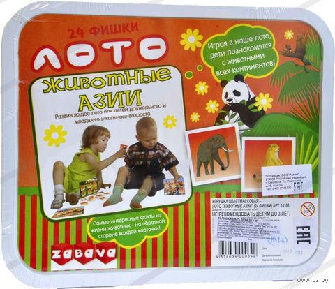 """Лото """"Животные Азии"""" — фото, картинка"""