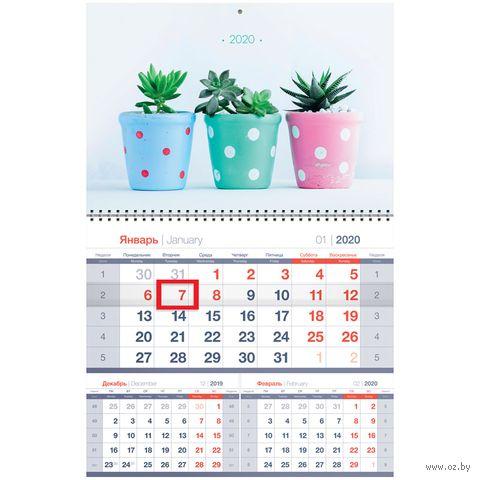 """Календарь настенный квартальный на 2020 год """"Mono Premium. Cactus"""" (32х47,5 см) — фото, картинка"""