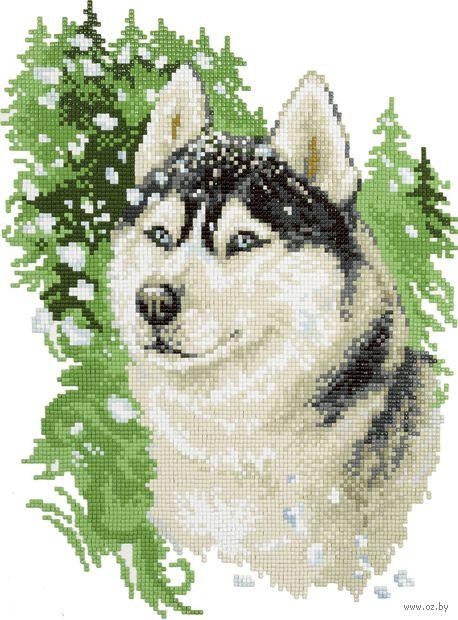"Алмазная вышивка-мозаика ""Хаски"" (345х255 мм) — фото, картинка"