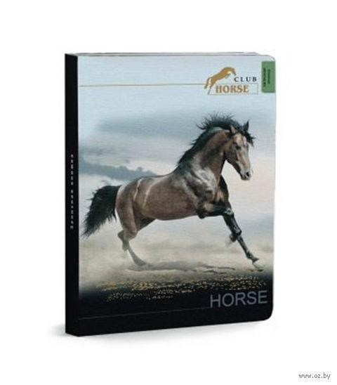 """Записная книжка """"Великолепная лошадь"""" (А6; 80 листов)"""