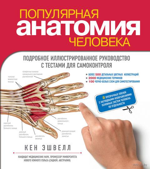 Популярная анатомия человека. Подробное иллюстрированное руководство с тестами для самоконтроля. Кен Эшвелл