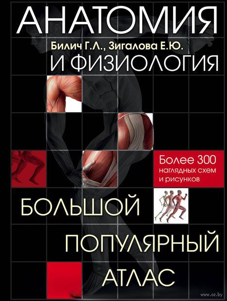 Анатомия и физиология. Большой популярный атлас — фото, картинка