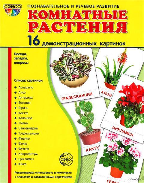 Комнатные растения (16 демонстрационных картинок) — фото, картинка