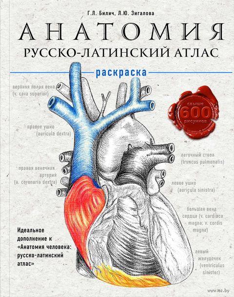 Анатомия. Русско-латинский атлас-раскраска — фото, картинка