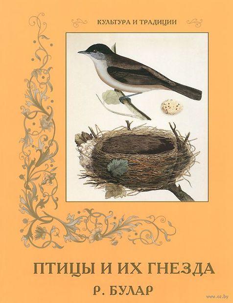 Птицы и их гнезда — фото, картинка