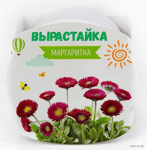 """Набор для выращивания растений """"Маргаритка"""" — фото, картинка"""