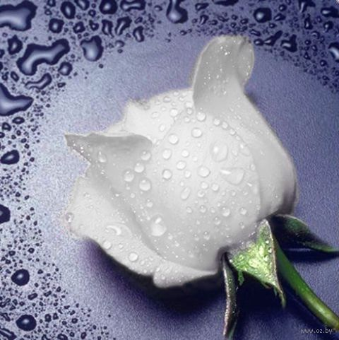 "Алмазная вышивка-мозаика ""Белая Роза"" (220х240 мм) — фото, картинка"