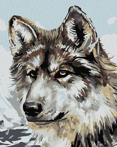 "Картина по номерам ""Серый волк"" (500х400 мм) — фото, картинка"