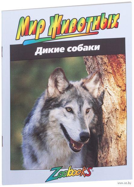Дикие собаки — фото, картинка