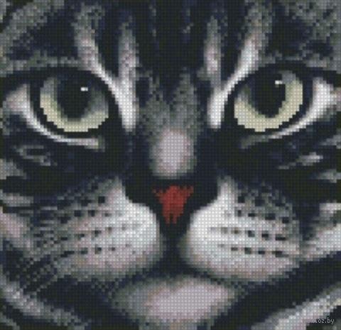"Алмазная вышивка-мозаика ""Мордочка кота"" (250х240 мм) — фото, картинка"